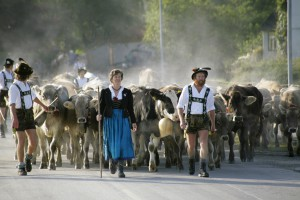 Viehscheid in Wertach *Touristinformation Wertach*